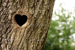 Bird nest in hollow tree trunk